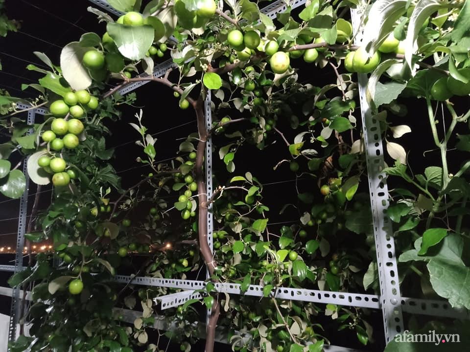 Vườn sân thượng xum xuê cây trái của ông bố đảm Sài Gòn giúp gia đình an toàn ở nhà chống dịch - Ảnh 7.