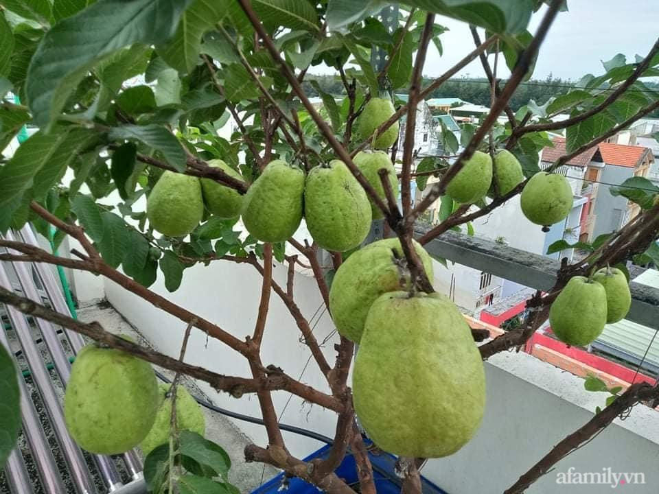 Vườn sân thượng xum xuê cây trái của ông bố đảm Sài Gòn giúp gia đình an toàn ở nhà chống dịch - Ảnh 9.