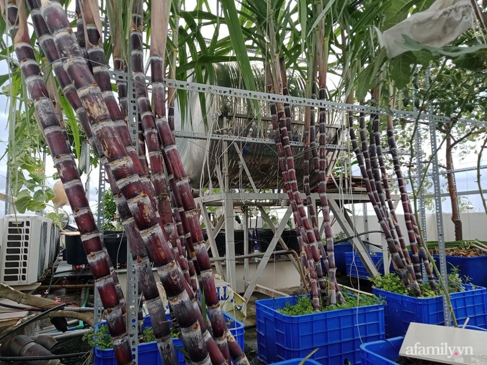 Vườn sân thượng xum xuê cây trái của ông bố đảm Sài Gòn giúp gia đình an toàn ở nhà chống dịch - Ảnh 6.