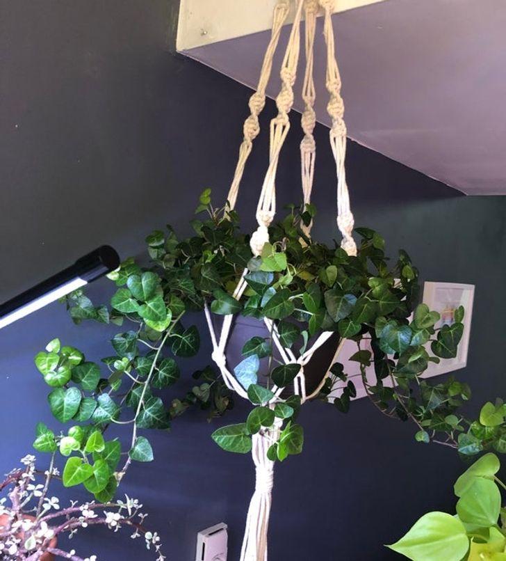 Những loại cây có thể hút ẩm hiệu quả trong nhà của bạn - Ảnh 1.