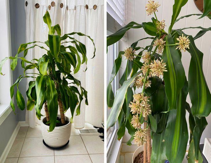 Những loại cây có thể hút ẩm hiệu quả trong nhà của bạn - Ảnh 8.