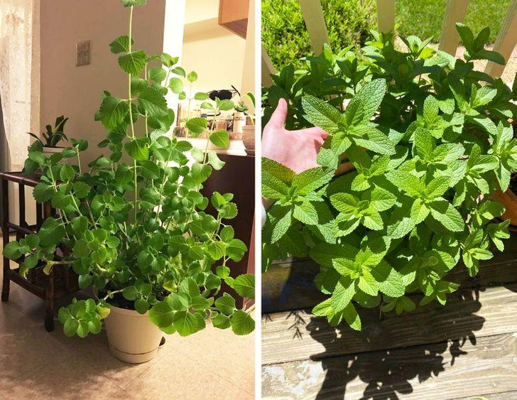 Những loại cây có thể hút ẩm hiệu quả trong nhà của bạn - Ảnh 5.