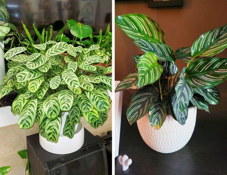 Những loại cây có thể hút ẩm hiệu quả trong nhà của bạn - Ảnh 6.