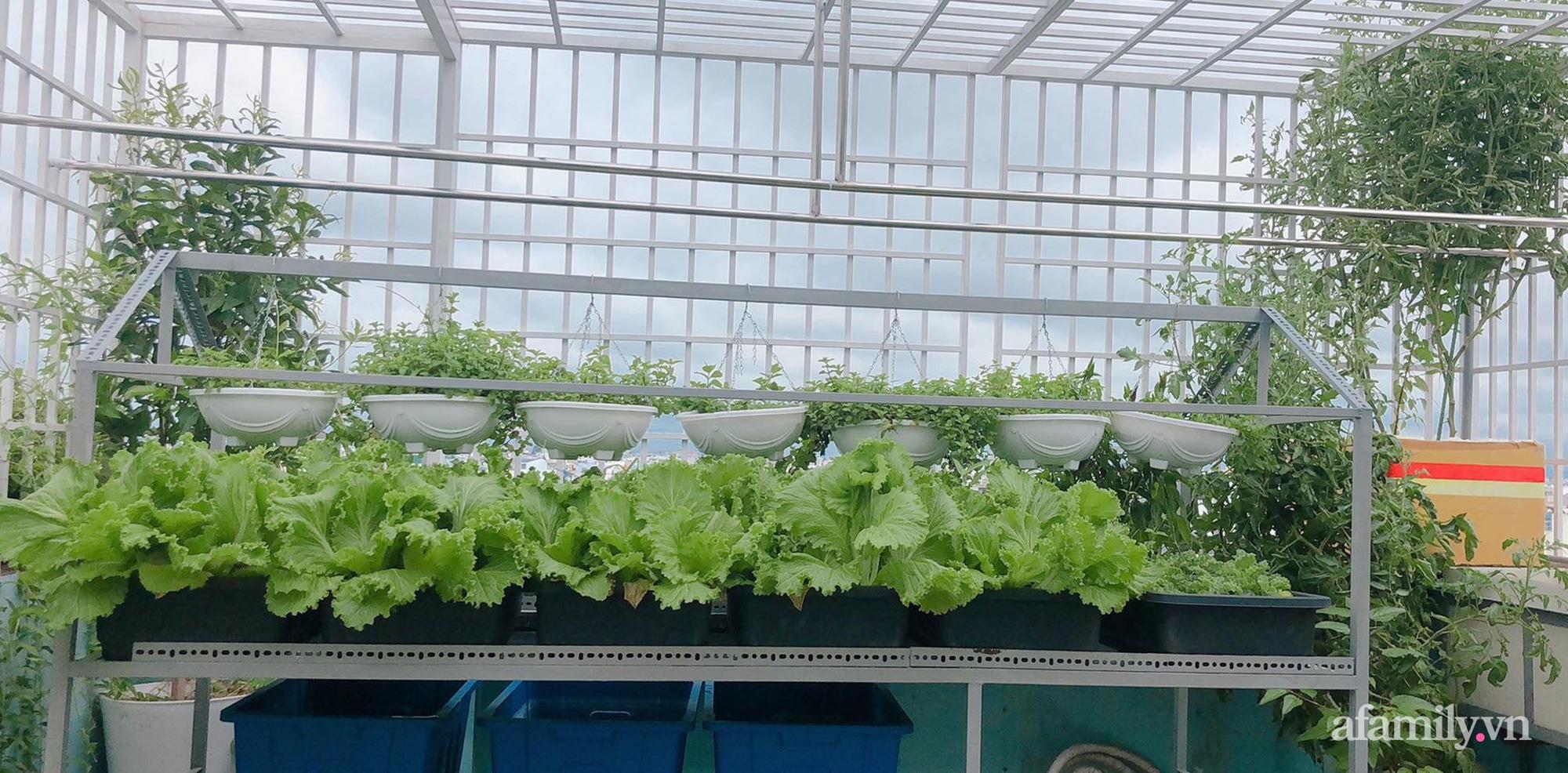 """Trước giãn cách 20 ngày, mẹ đảm Sài Gòn """"nhanh tay"""" trồng đủ loại rau tới giờ """"um tùm"""" ăn thoải mái lại tiết kiệm tiền - Ảnh 3."""