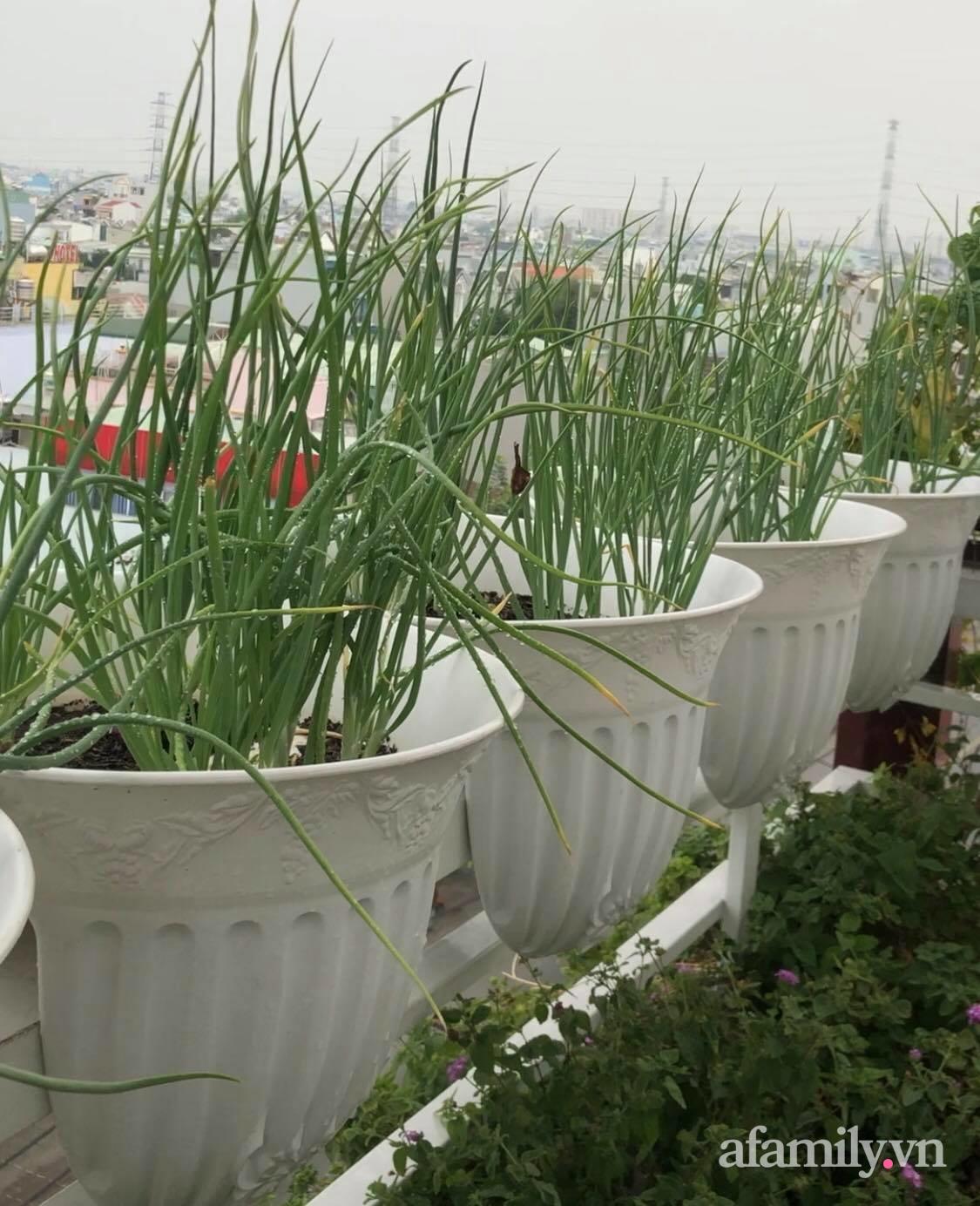 """Trước giãn cách 20 ngày, mẹ đảm Sài Gòn """"nhanh tay"""" trồng đủ loại rau tới giờ um tùm ăn thoải mái lại còn tiết kiệm tiền - Ảnh 4."""