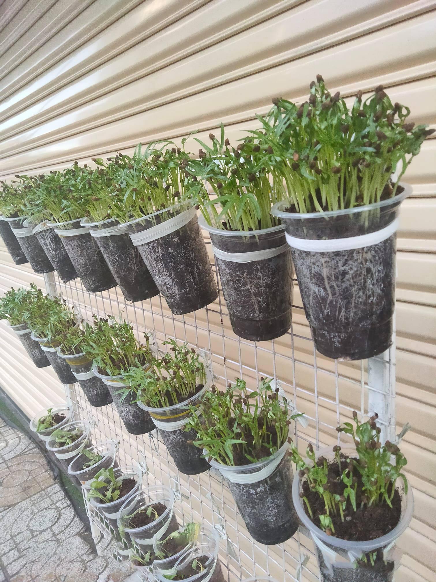 Học cô gái Tiền Giang tận dụng chai nhựa trồng rau sạch trong mùa dịch - Ảnh 10.