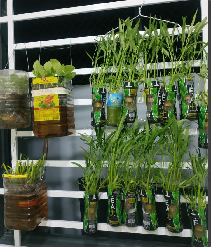 Học cô gái Tiền Giang tận dụng chai nhựa trồng rau sạch trong mùa dịch - Ảnh 9.