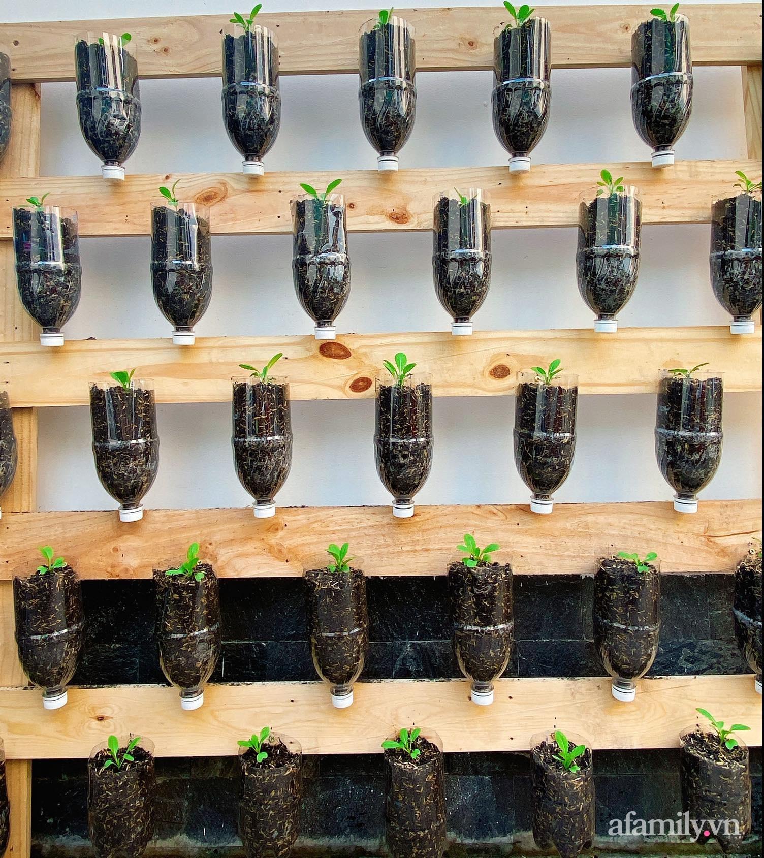 Học cô gái Tiền Giang tận dụng chai nhựa trồng rau sạch trong mùa dịch - Ảnh 5.
