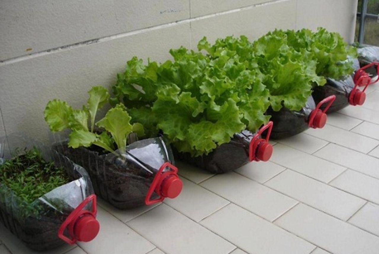 Học cô gái Tiền Giang tận dụng chai nhựa trồng rau sạch trong mùa dịch - Ảnh 12.