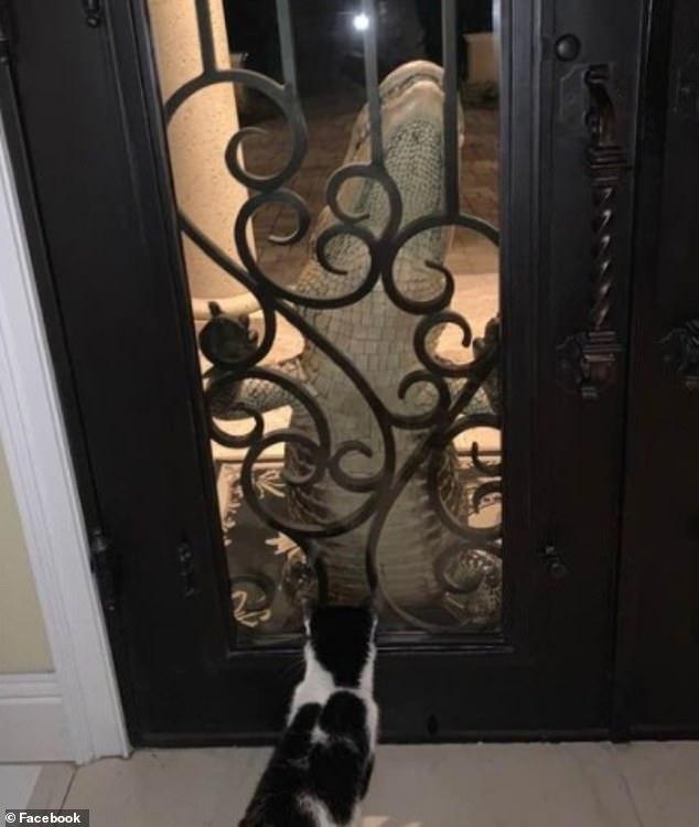 """Rắn hổ mang xông vào nhà, cô mèo tung tuyệt chiêu khiến đối thủ """"đứng hình"""" 2 tiếng, xem vừa khó tin vừa buồn cười - Ảnh 4."""