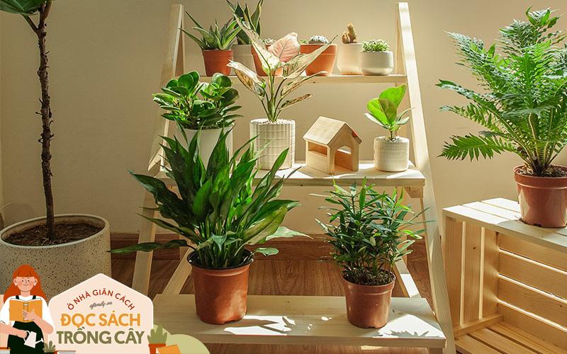 5 mẫu kệ giúp bạn chỉ vài phút là tối ưu không gian trồng cây trong nhà, đẹp đến mức nhìn là muốn mua ngay