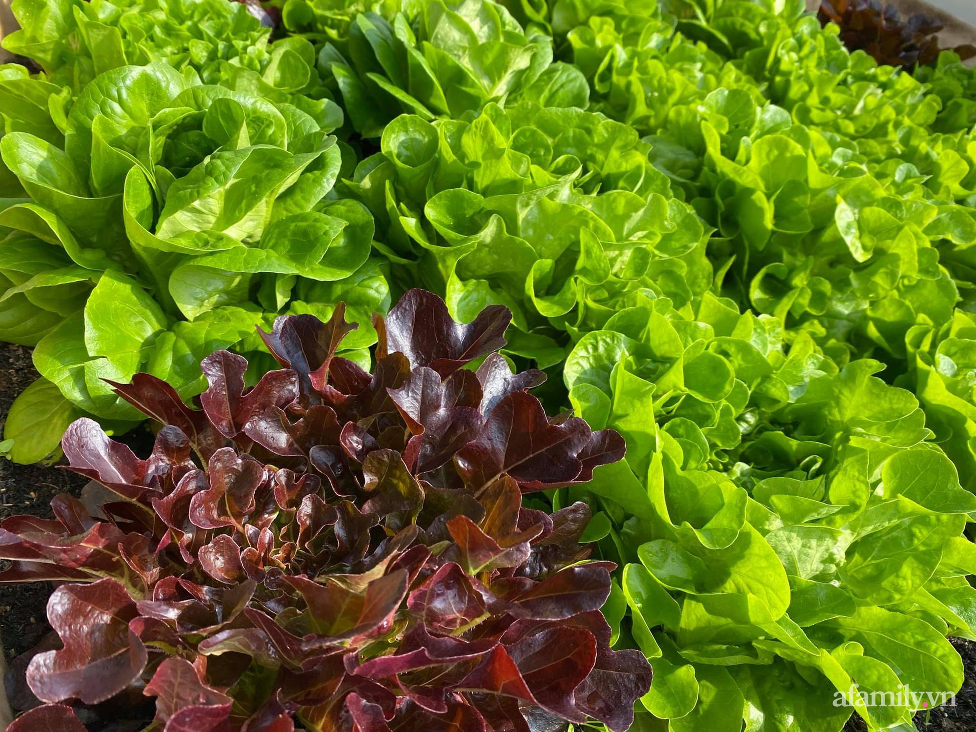 Giãn cách không ra khỏi nhà vẫn đủ rau quả thưởng thức nhờ vườn cây xanh um trên sân thượng ở Đà Nẵng - Ảnh 14.