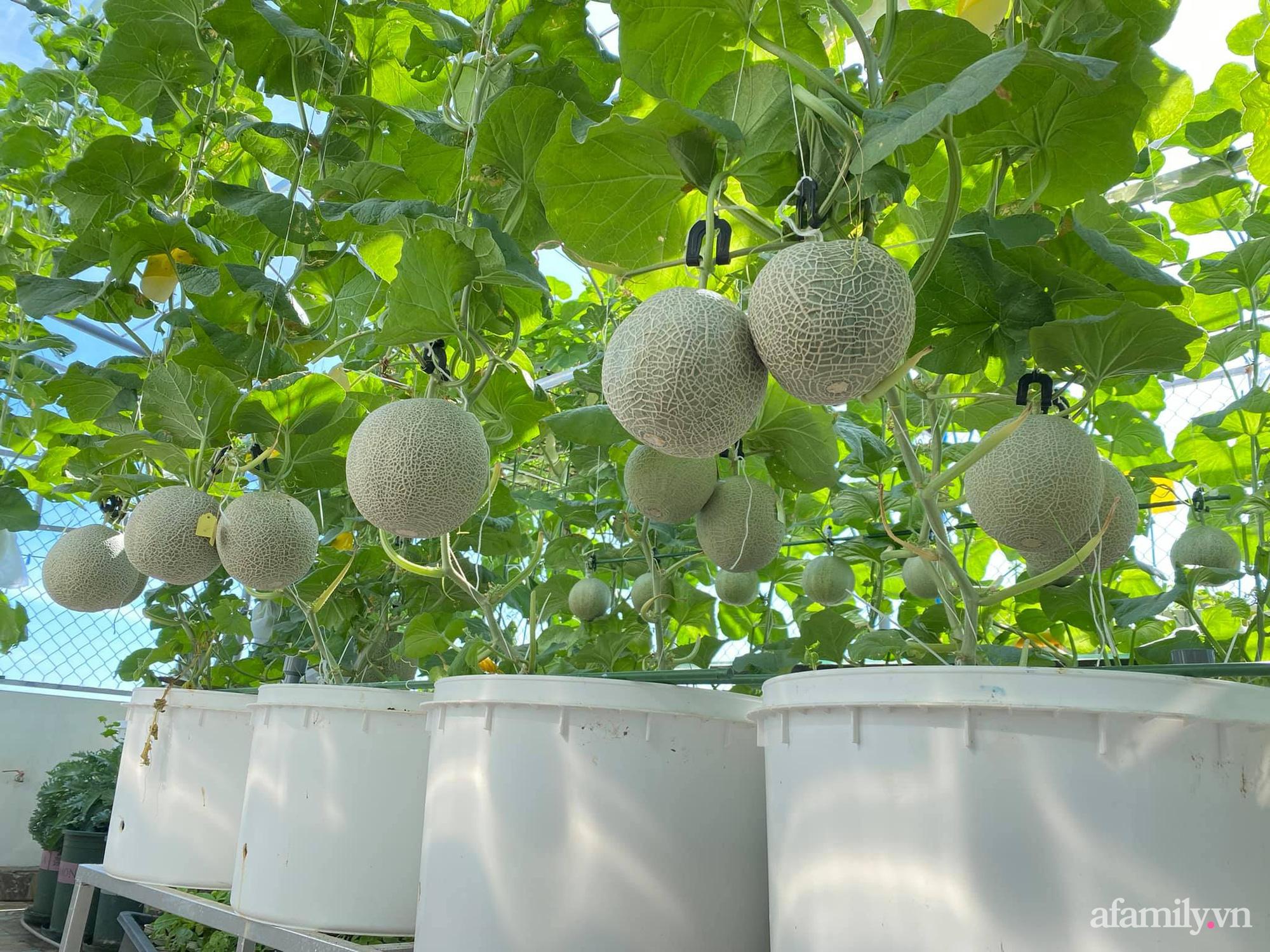 Giãn cách không ra khỏi nhà vẫn đủ rau quả thưởng thức nhờ vườn cây xanh um trên sân thượng ở Đà Nẵng - Ảnh 7.