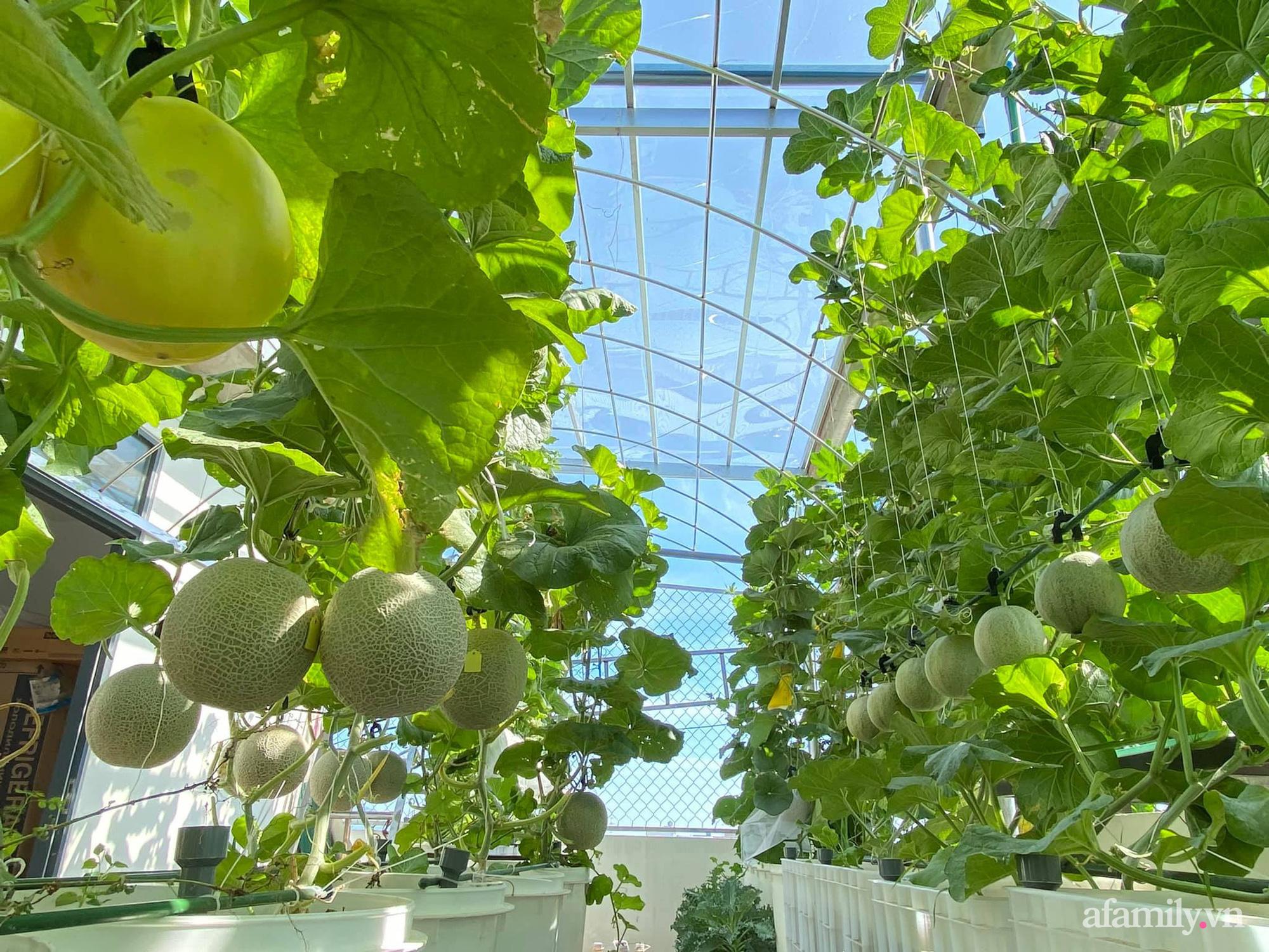 Giãn cách không ra khỏi nhà vẫn đủ rau quả thưởng thức nhờ vườn cây xanh um trên sân thượng ở Đà Nẵng - Ảnh 4.