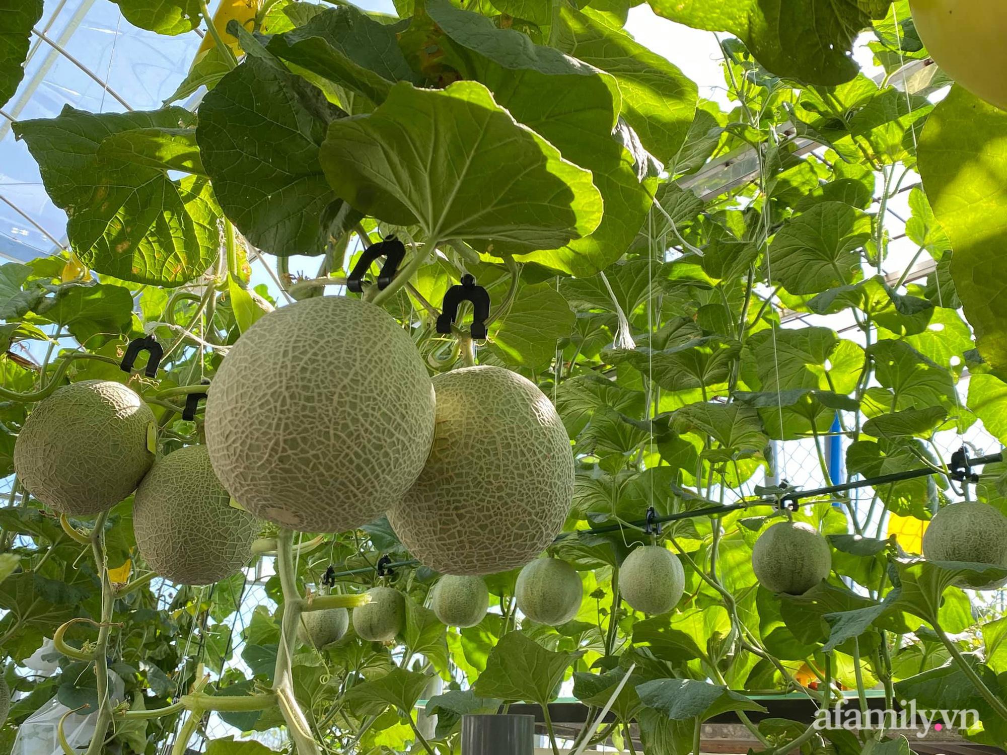Giãn cách không ra khỏi nhà vẫn đủ rau quả thưởng thức nhờ vườn cây xanh um trên sân thượng ở Đà Nẵng - Ảnh 10.