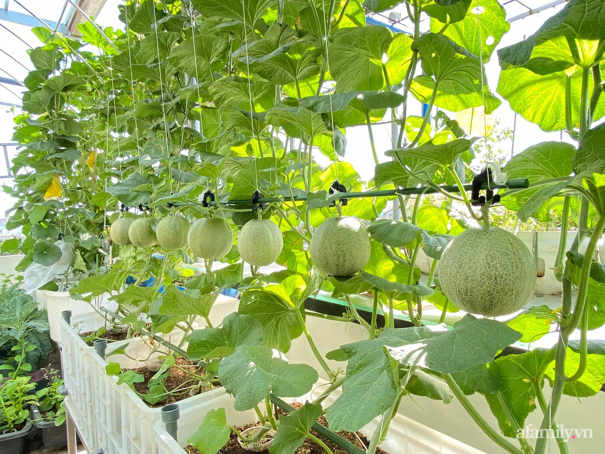 Giãn cách không ra khỏi nhà vẫn đủ rau quả thưởng thức nhờ vườn cây xanh um trên sân thượng ở Đà Nẵng - Ảnh 8.