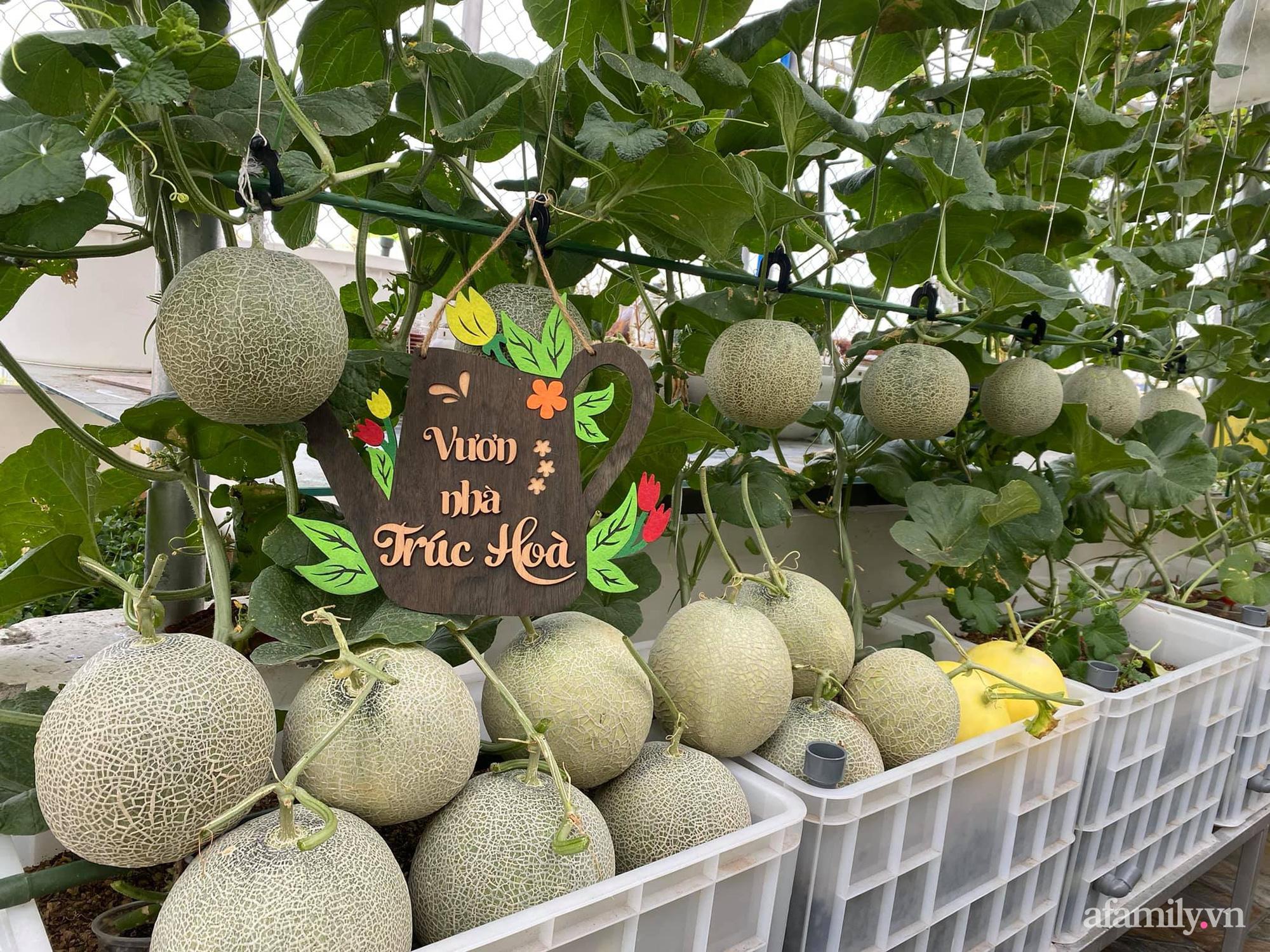 Giãn cách không ra khỏi nhà vẫn đủ rau quả thưởng thức nhờ vườn cây xanh um trên sân thượng ở Đà Nẵng - Ảnh 9.