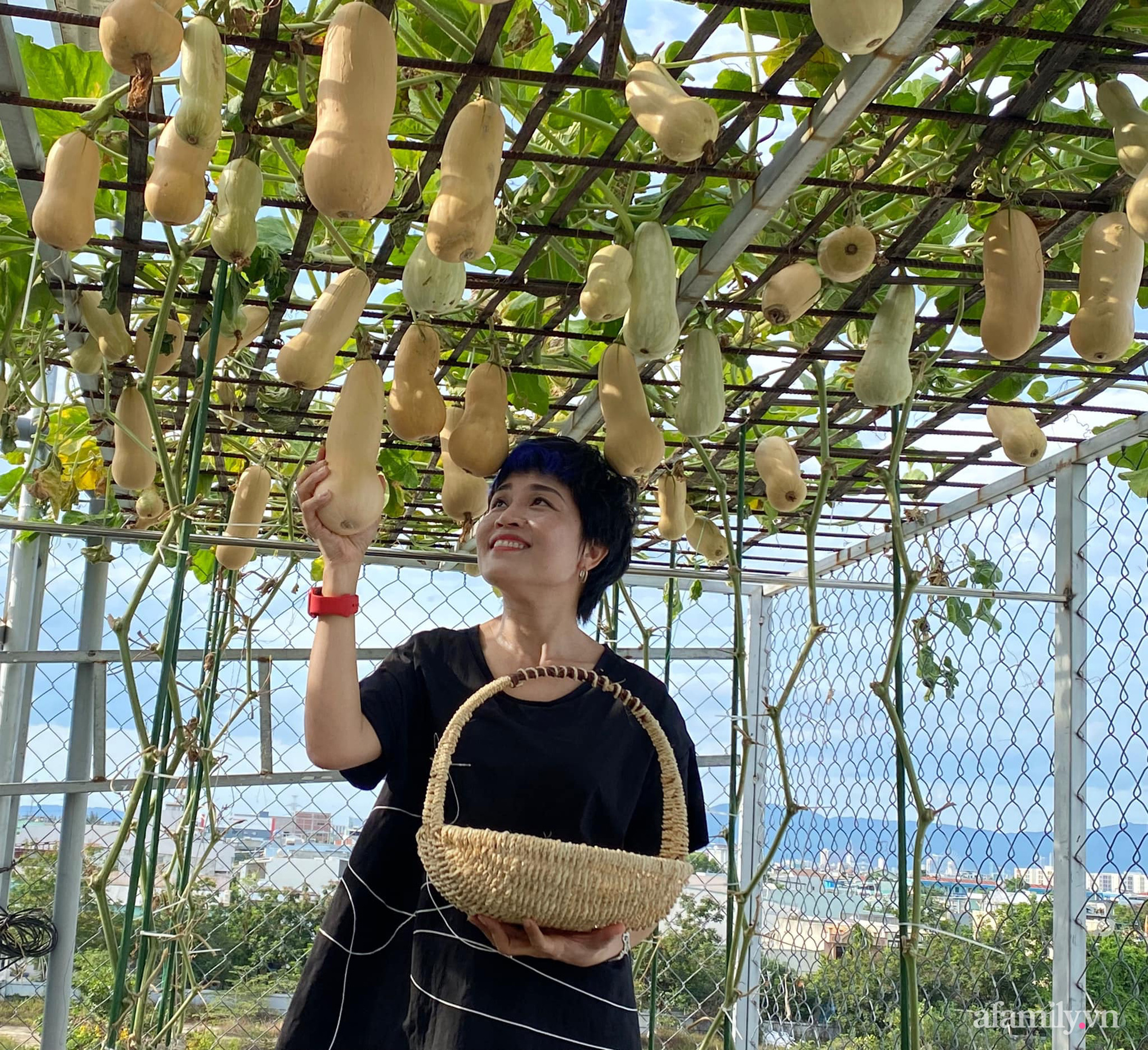 Giãn cách không ra khỏi nhà vẫn đủ rau quả thưởng thức nhờ vườn cây xanh um trên sân thượng ở Đà Nẵng - Ảnh 2.