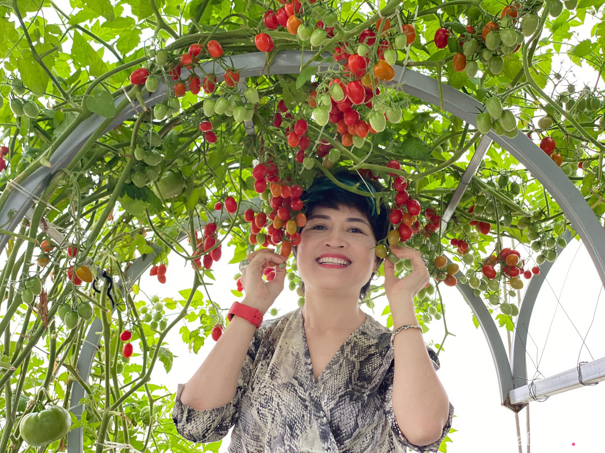 Giãn cách không ra khỏi nhà vẫn đủ rau quả thưởng thức nhờ vườn cây xanh um trên sân thượng ở Đà Nẵng - Ảnh 1.