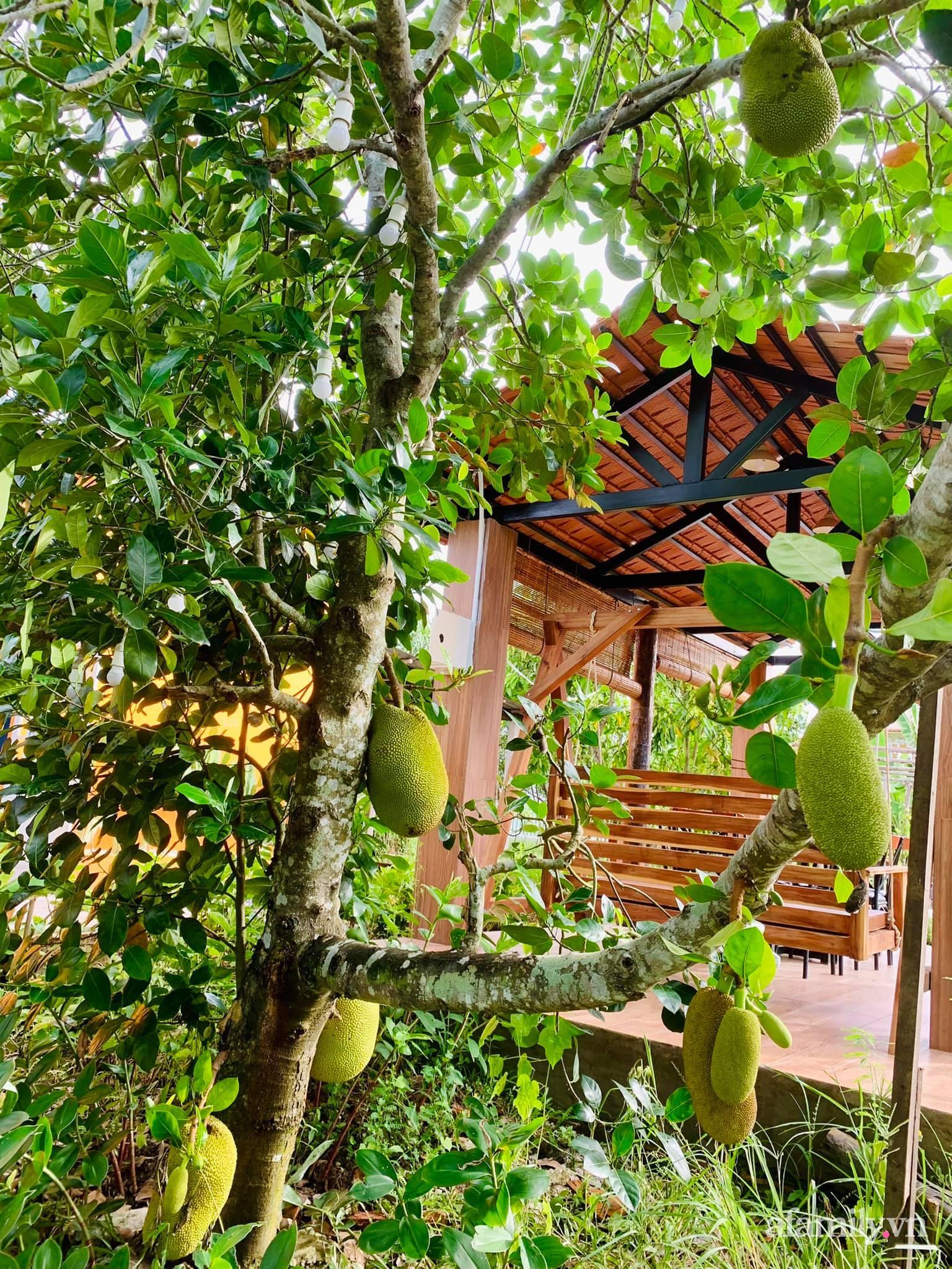 Sống an yên giữa dịch COVID nhờ ao cá vườn cây xanh mát tốt tươi ở Bạc Liêu - Ảnh 9.