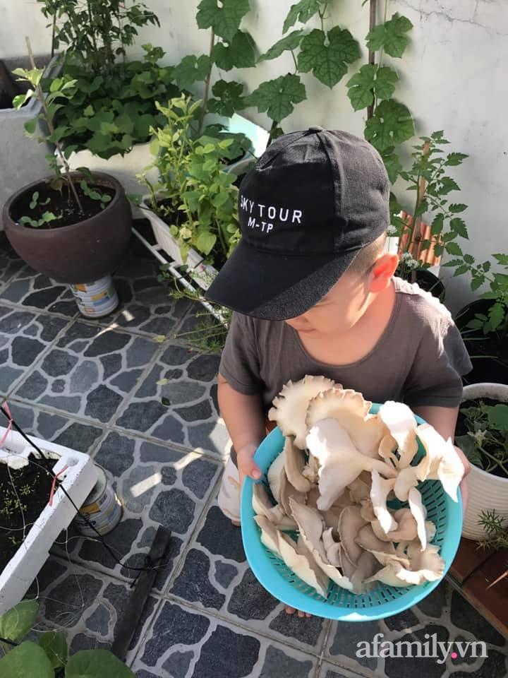 """Ở nhà giãn cách vì dịch nghe """"anh chồng đảm"""" Sài Gòn mách cách trồng nấm bào ngư xám cho năng suất khủng - Ảnh 7."""