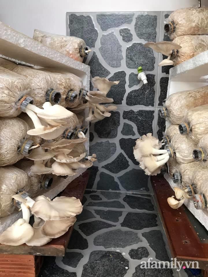 """Ở nhà giãn cách vì dịch nghe """"anh chồng đảm"""" Sài Gòn mách cách trồng nấm bào ngư xám cho năng suất khủng - Ảnh 3."""