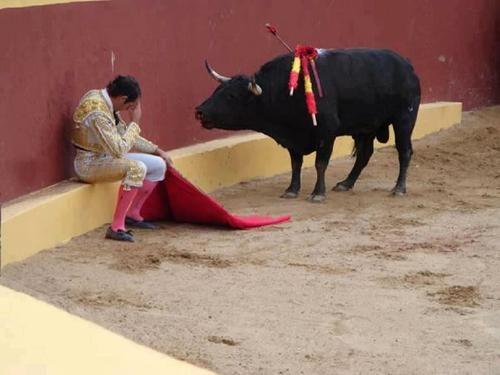 Đấu sĩ gục mặt trước bò tót vì hối hận, cảnh tượng gây thương cảm nhưng câu chuyện thực lại đầy mỉa mai, đau đớn với con vật - Ảnh 1.