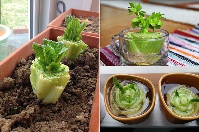 Hướng dẫn cách trồng cực dễ 4 loại rau gia vị bạn không thể thiếu trong bữa ăn hàng ngày - Ảnh 2.