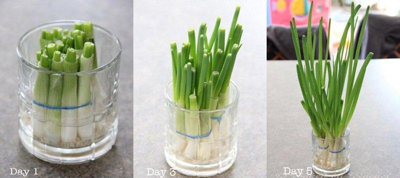Hướng dẫn cách trồng cực dễ 4 loại rau gia vị bạn không thể thiếu trong bữa ăn hàng ngày - Ảnh 1.