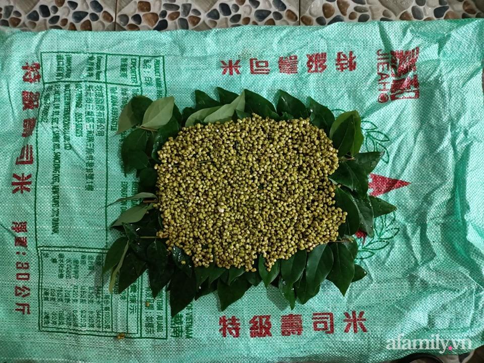 Giãn cách ở nhà học mẹ đảm Cà Mau cách trồng 300gram đậu thu hơn 2kg giá chỉ trong 4 ngày - Ảnh 6.