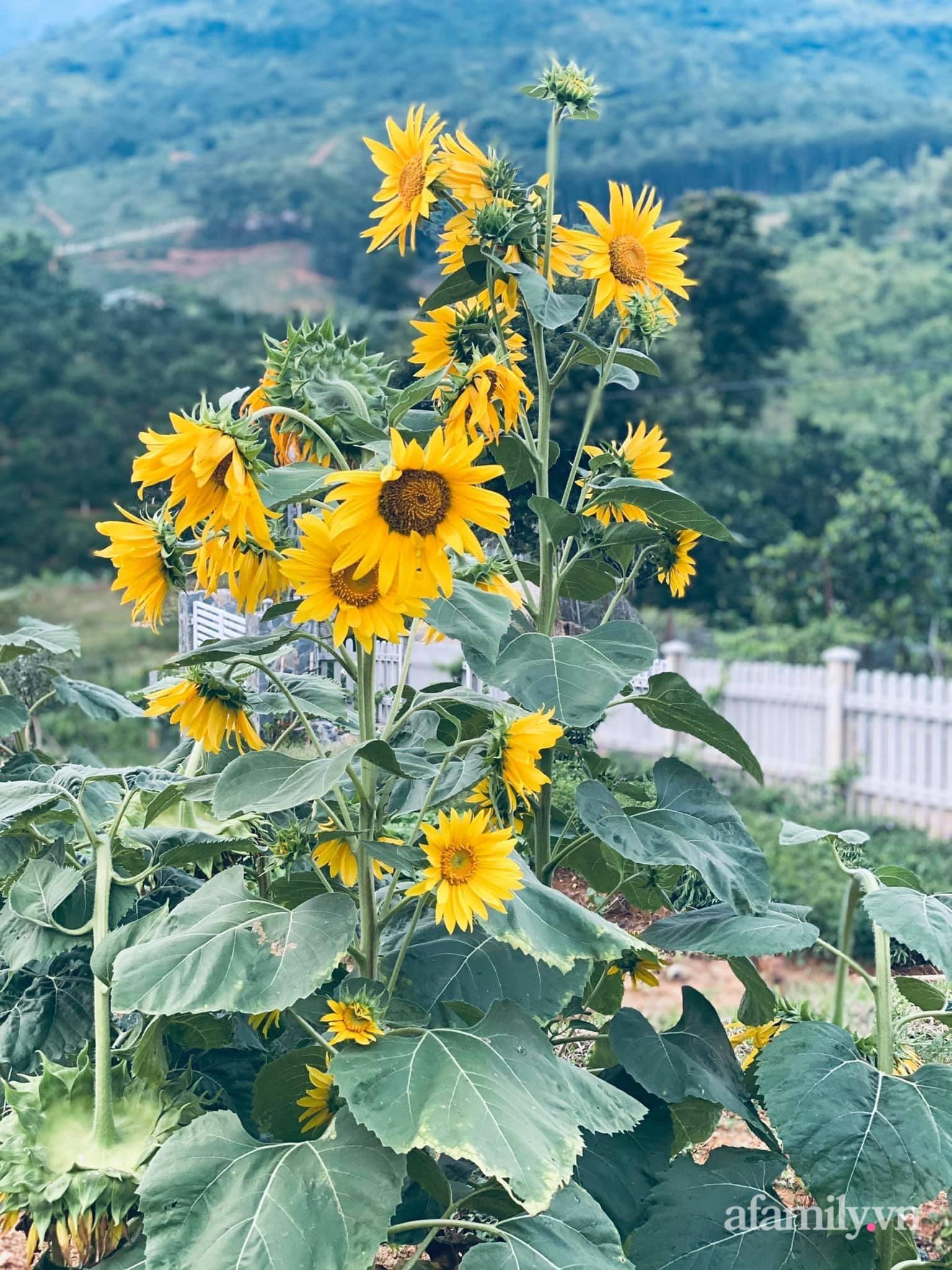 Căn nhà vườn trên núi đẹp an yên, tĩnh lặng với những xanh tươi đẹp đẽ ở ngoại thành Hà Nội - Ảnh 11.
