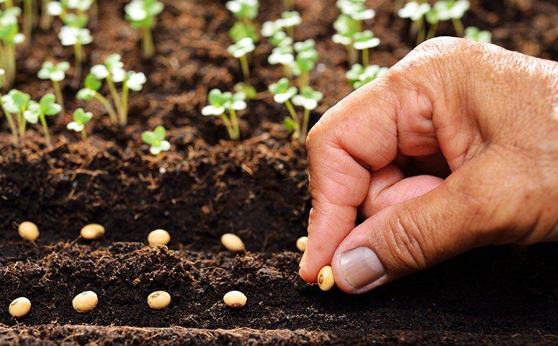 Cách trồng cây trong chậu chỉ trong 5 bước đơn giản - Ảnh 6.