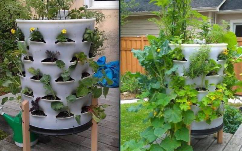 Cách trồng cây trong chậu chỉ trong 5 bước đơn giản - Ảnh 2.
