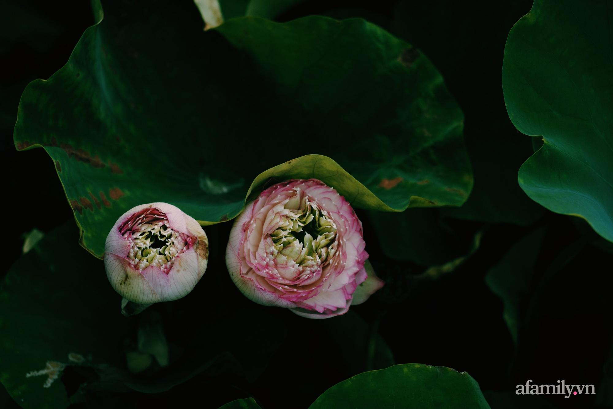 """""""Hồ sen"""" với đủ loại hoa hiếm trên penthouse 300m² của travel blogger dành tặng vợ ở Hà Nội - Ảnh 16."""