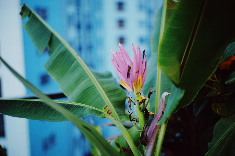 """""""Hồ sen"""" với đủ loại hoa hiếm trên penthouse 300m² của travel blogger dành tặng vợ ở Hà Nội - Ảnh 24."""
