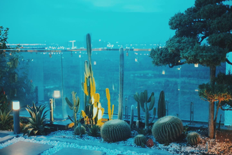 """""""Hồ sen"""" với đủ loại hoa hiếm trên penthouse 300m² của travel blogger dành tặng vợ ở Hà Nội - Ảnh 9."""