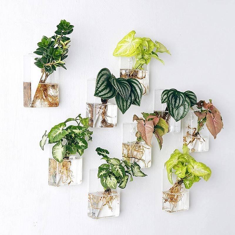 Những ý tưởng trồng cây treo tạo góc xanh tràn đầy sức sống cho mọi không gian - Ảnh 2.