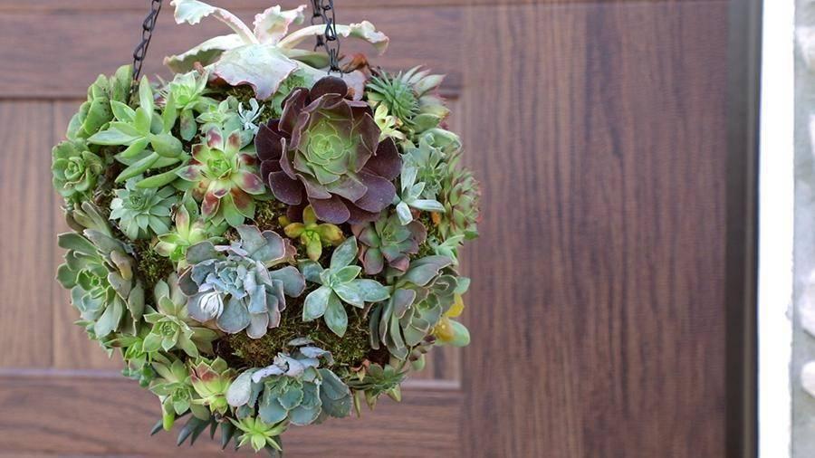 Những ý tưởng trồng cây treo tạo góc xanh tràn đầy sức sống cho mọi không gian - Ảnh 9.