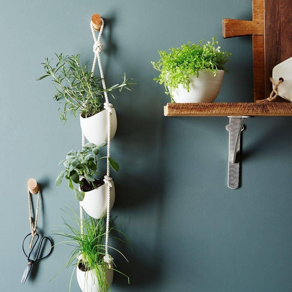 Những ý tưởng trồng cây treo tạo góc xanh tràn đầy sức sống cho mọi không gian - Ảnh 1.