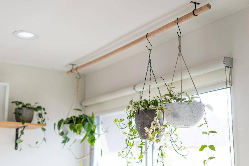 Những ý tưởng trồng cây treo tạo góc xanh tràn đầy sức sống cho mọi không gian - Ảnh 4.