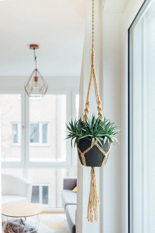 Những ý tưởng trồng cây treo tạo góc xanh tràn đầy sức sống cho mọi không gian - Ảnh 3.