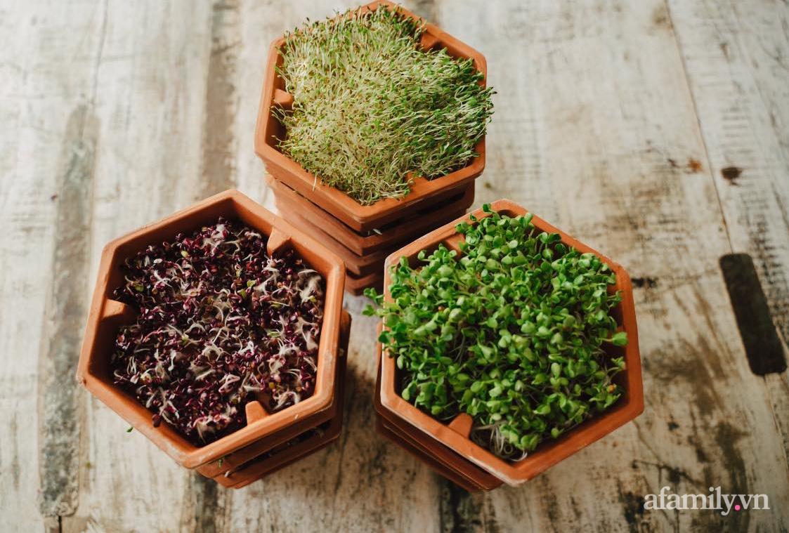 Mẹ Việt ở Đức chia sẻ cách trồng đủ loại rau mầm cực dễ cực nhanh đảm bảo dinh dưỡng cho gia đình trong mùa dịch - Ảnh 6.