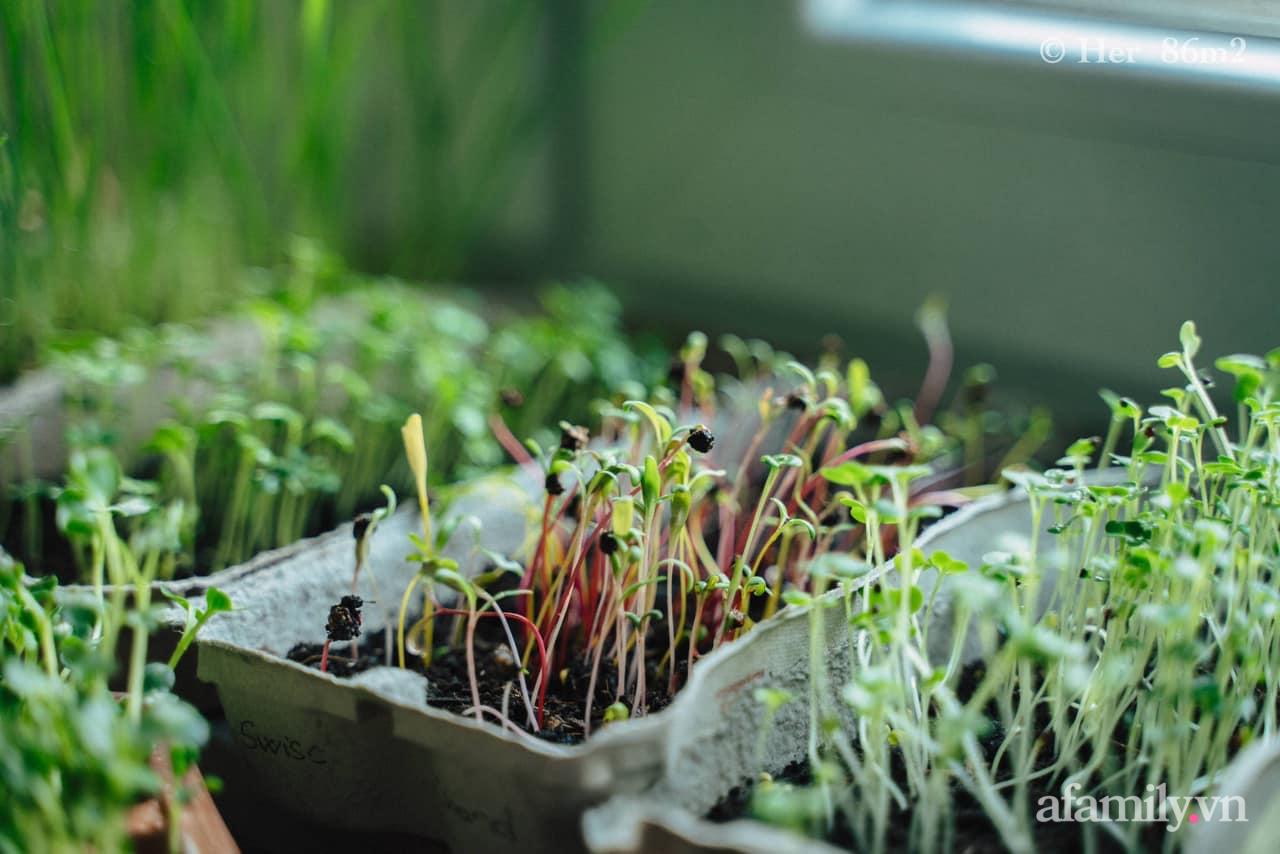 Mẹ Việt ở Đức chia sẻ cách trồng đủ loại rau mầm cực dễ cực nhanh đảm bảo dinh dưỡng cho gia đình trong mùa dịch - Ảnh 2.