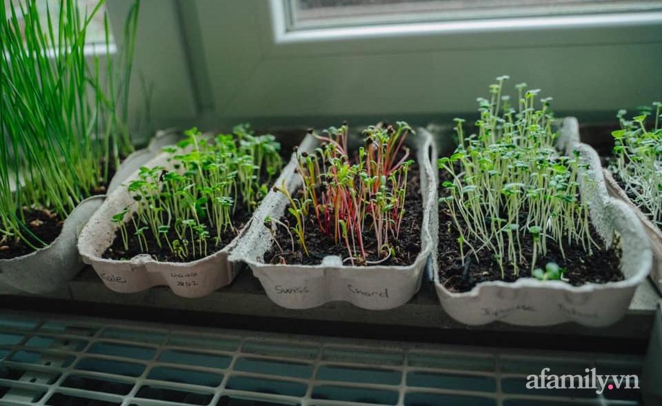 Mẹ Việt ở Đức chia sẻ cách trồng đủ loại rau mầm cực dễ cực nhanh đảm bảo dinh dưỡng cho gia đình trong mùa dịch - Ảnh 3.