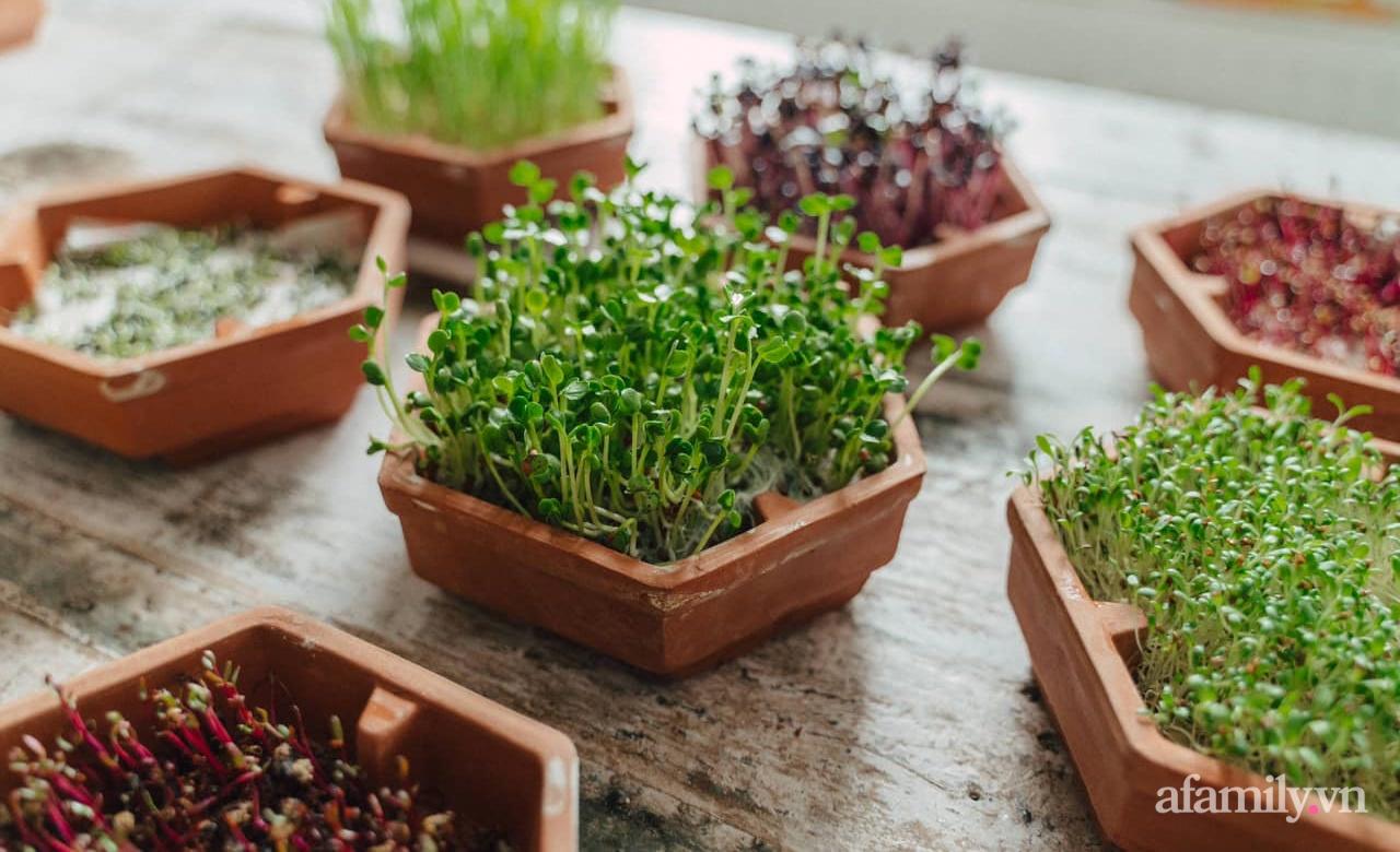 Mẹ Việt ở Đức chia sẻ cách trồng đủ loại rau mầm cực dễ cực nhanh đảm bảo dinh dưỡng cho gia đình trong mùa dịch - Ảnh 4.