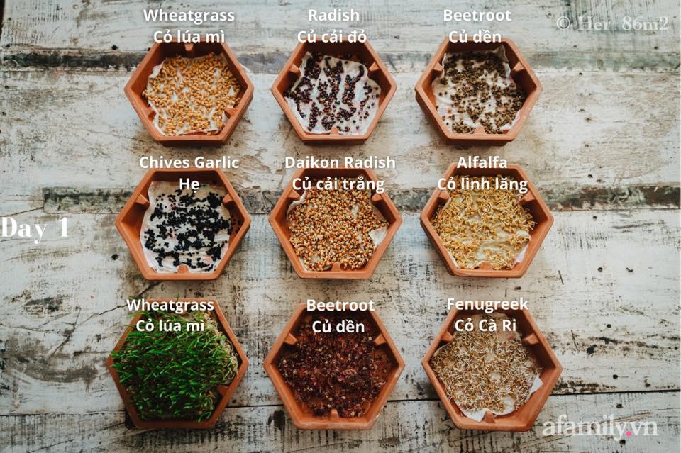 Mẹ Việt ở Đức chia sẻ cách trồng đủ loại rau mầm cực dễ cực nhanh đảm bảo dinh dưỡng cho gia đình trong mùa dịch - Ảnh 9.