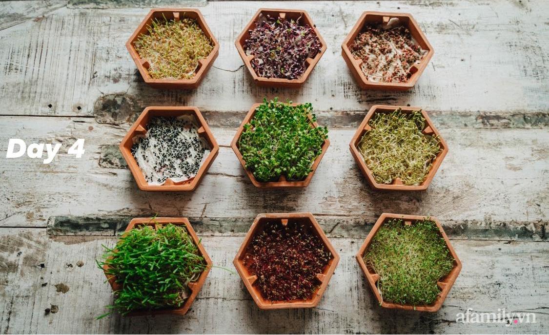 Mẹ Việt ở Đức chia sẻ cách trồng đủ loại rau mầm cực dễ cực nhanh đảm bảo dinh dưỡng cho gia đình trong mùa dịch - Ảnh 12.