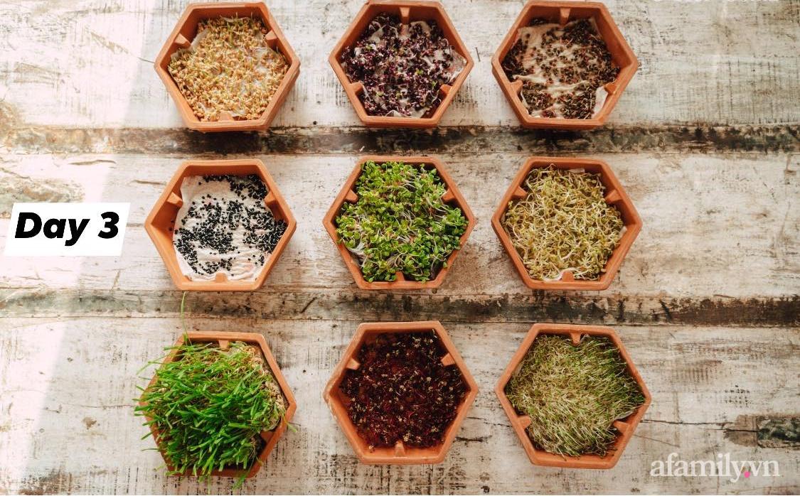 Mẹ Việt ở Đức chia sẻ cách trồng đủ loại rau mầm cực dễ cực nhanh đảm bảo dinh dưỡng cho gia đình trong mùa dịch - Ảnh 11.