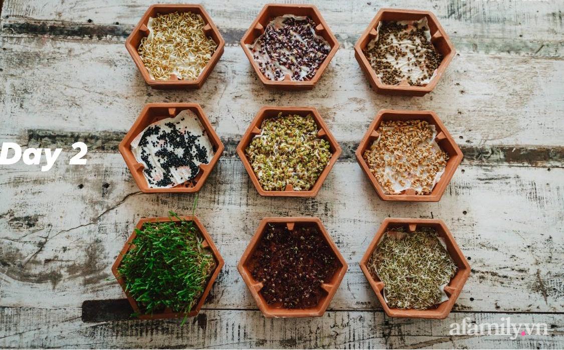 Mẹ Việt ở Đức chia sẻ cách trồng đủ loại rau mầm cực dễ cực nhanh đảm bảo dinh dưỡng cho gia đình trong mùa dịch - Ảnh 10.