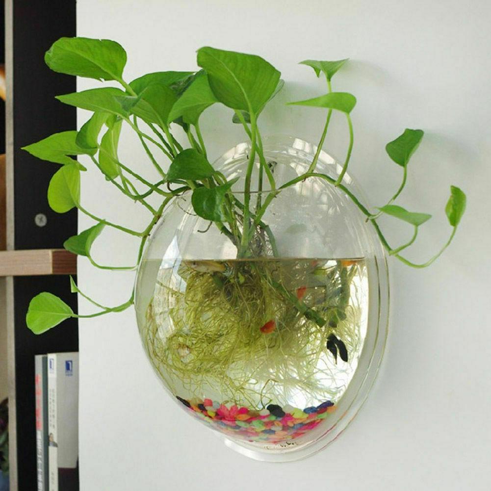 7 mẫu bình thủy sinh giúp căn phòng của bạn đẹp sang chảnh giúp mang năng lượng tích cực cho gia chủ - Ảnh 1.